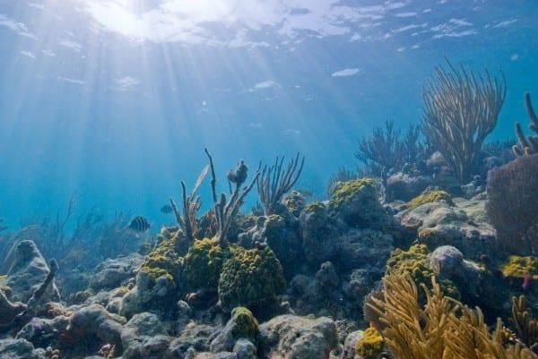 Biscayne_underwater